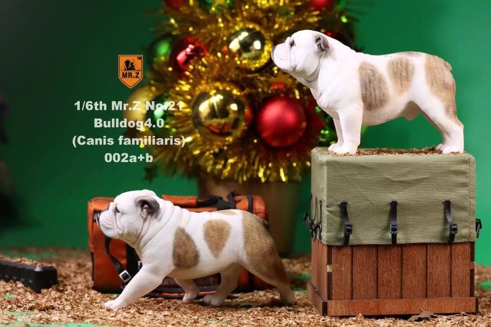mrZ-brit bulldog015