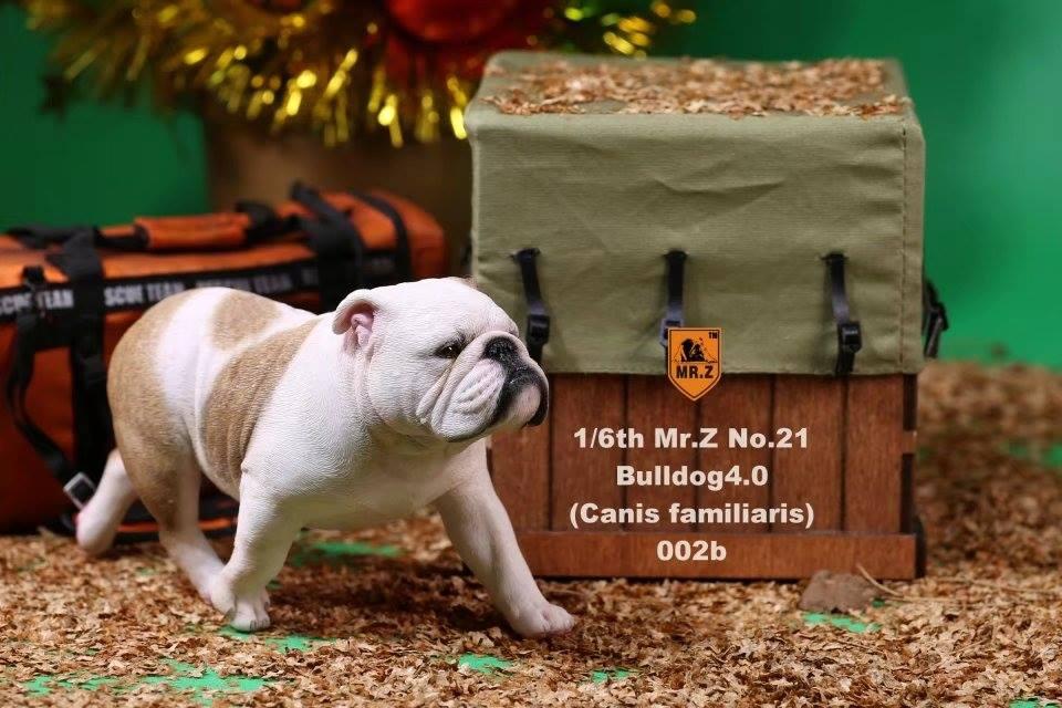 mrZ-brit bulldog016