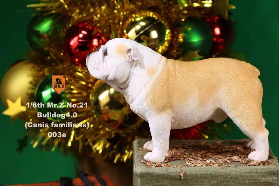 mrZ-brit bulldog018