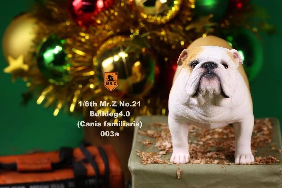 mrZ-brit bulldog019
