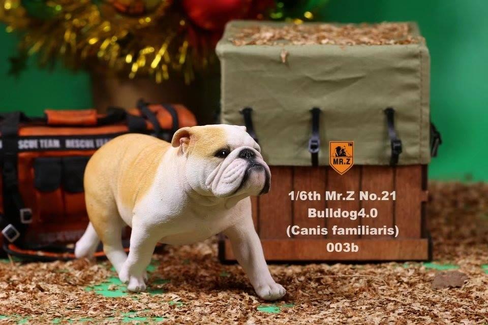 mrZ-brit bulldog020