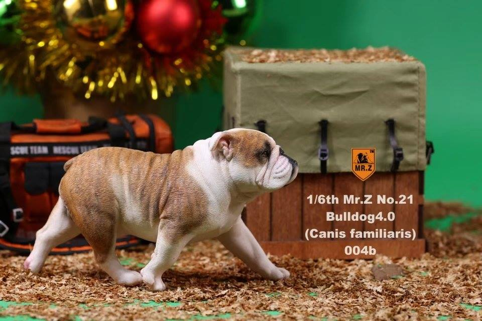 mrZ-brit bulldog023