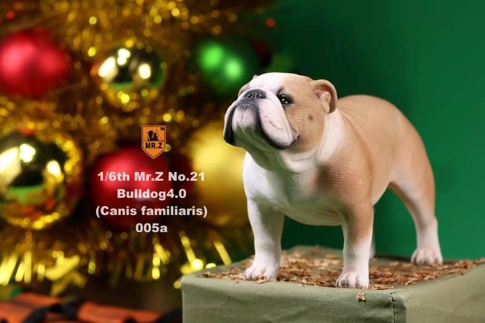mrZ-brit bulldog025