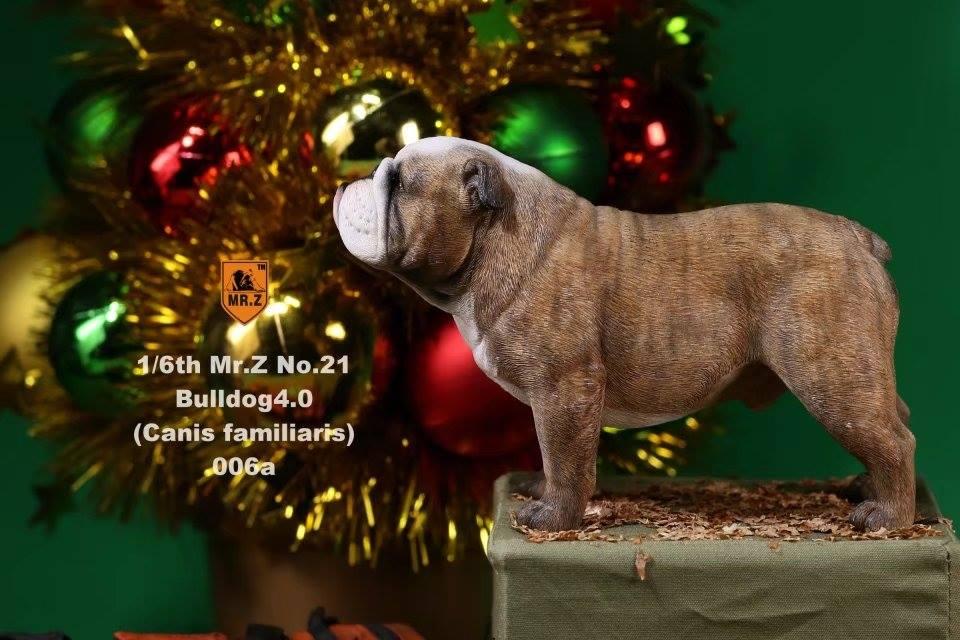 mrZ-brit bulldog027