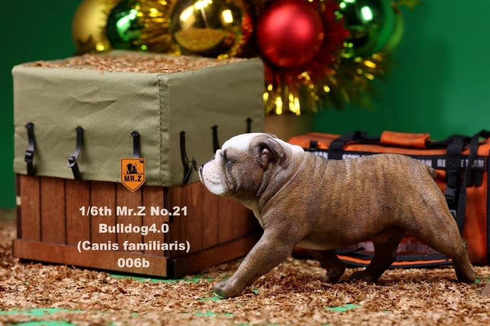 mrZ-brit bulldog028