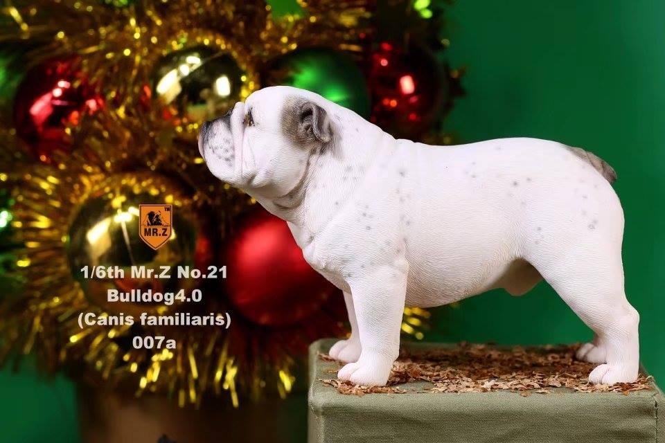 mrZ-brit bulldog030