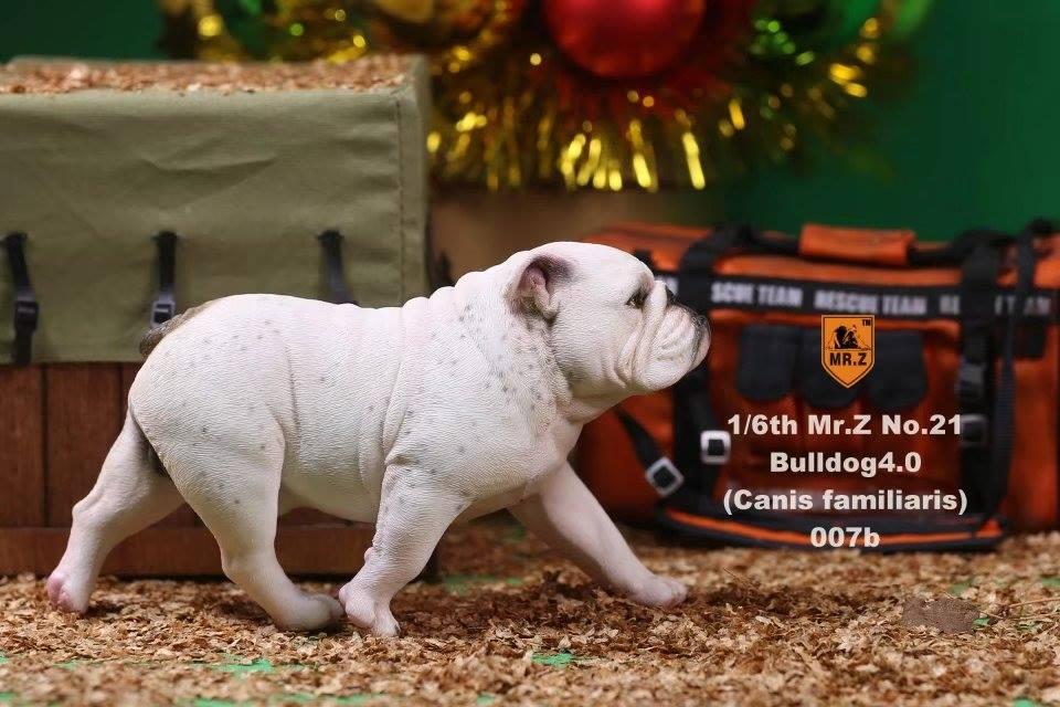 mrZ-brit bulldog031