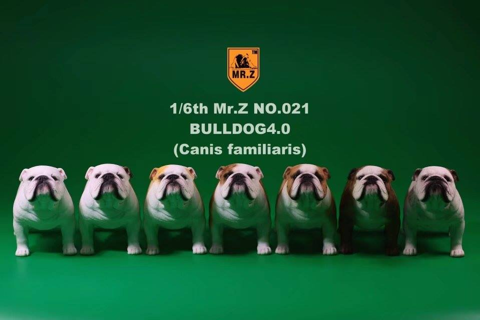 mrZ-brit bulldog032