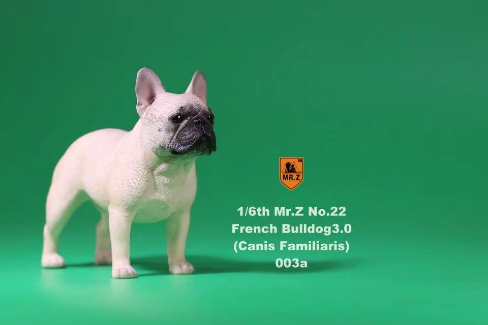 mrz-french bulldog0