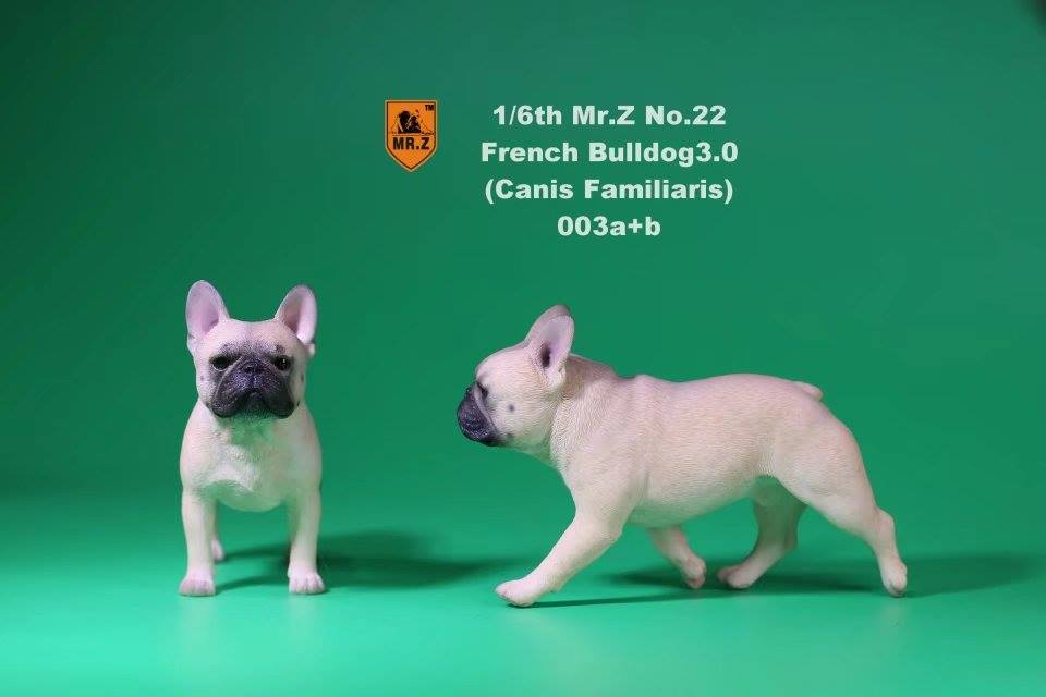 mrz-french bulldog01