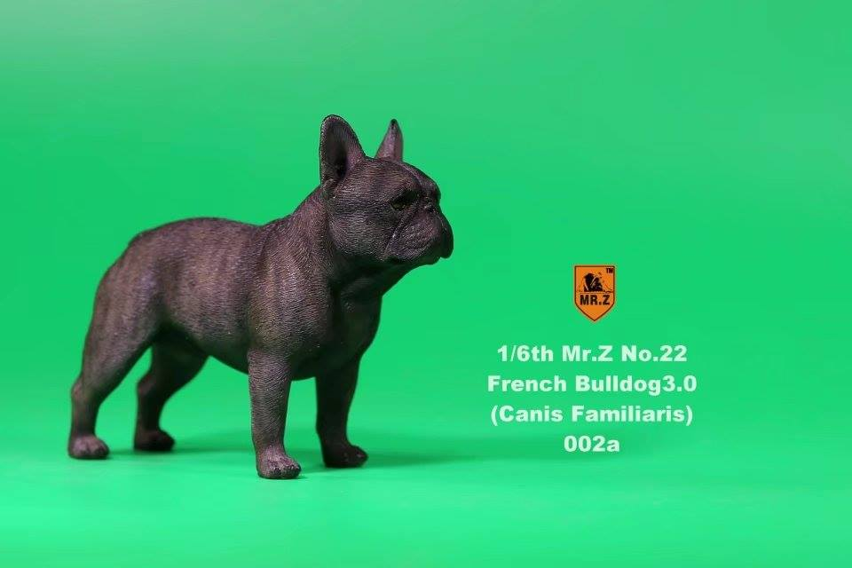 mrz-french bulldog02