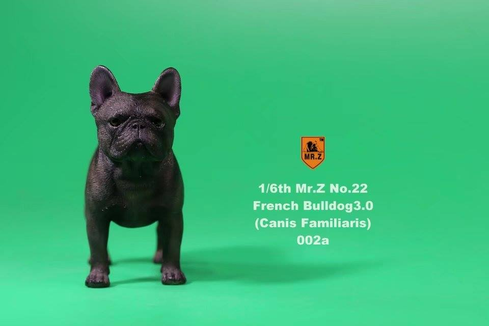 mrz-french bulldog03