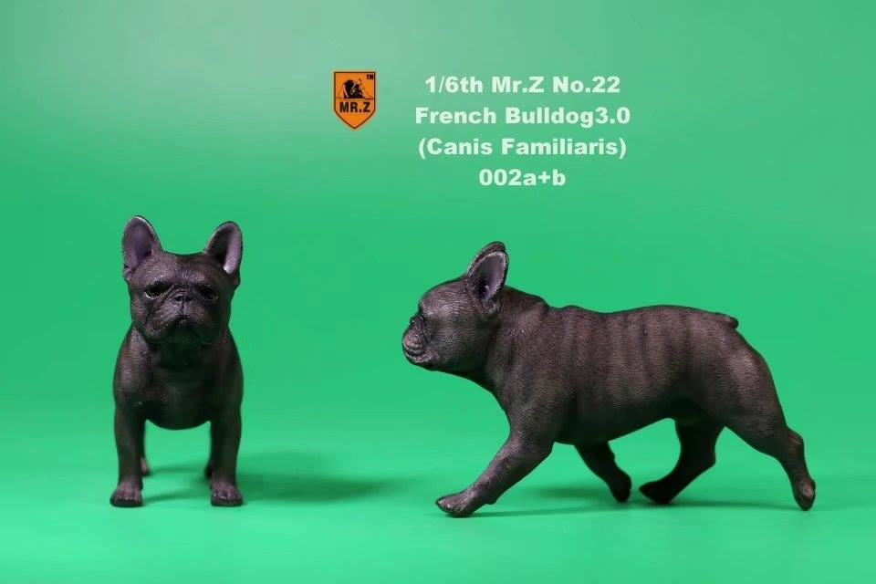 mrz-french bulldog04