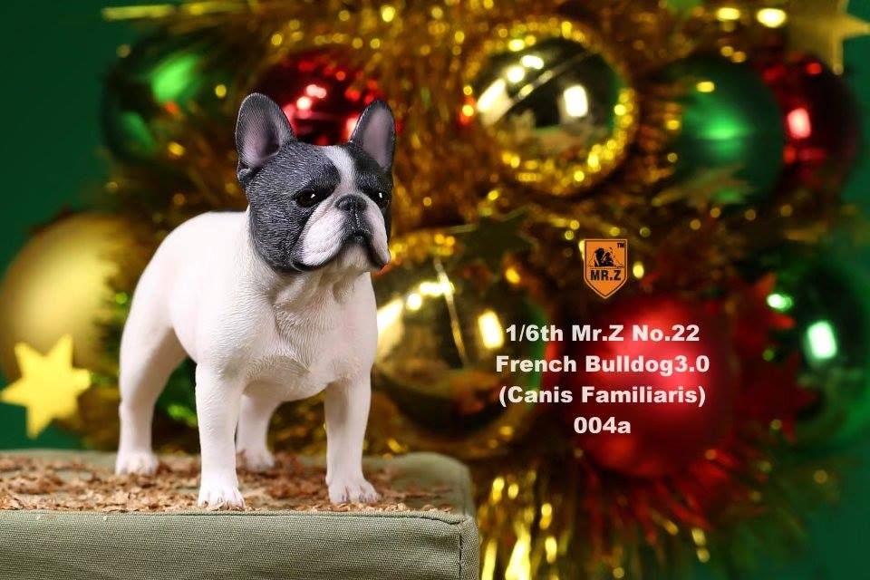 mrz-french bulldog06