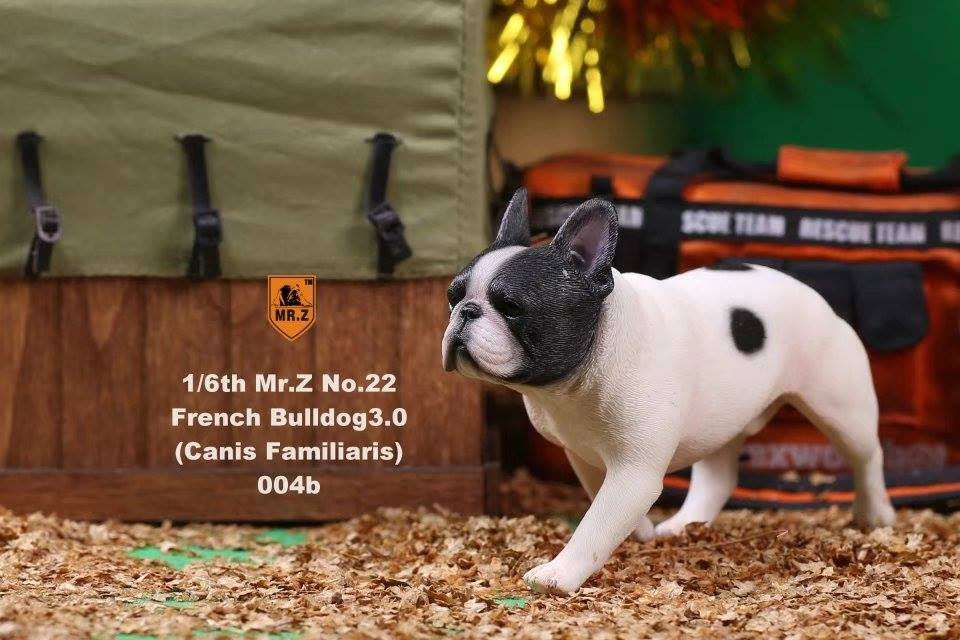 mrz-french bulldog07