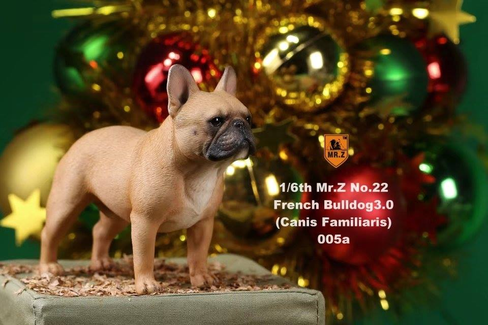 mrz-french bulldog08