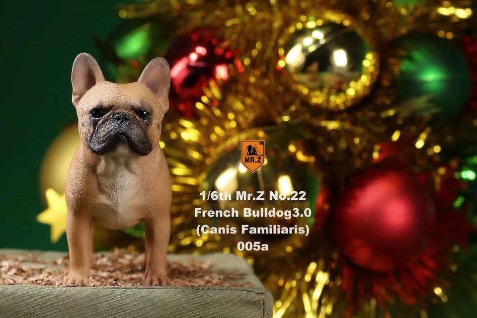 mrz-french bulldog09
