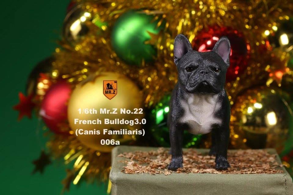 mrz-french bulldog10