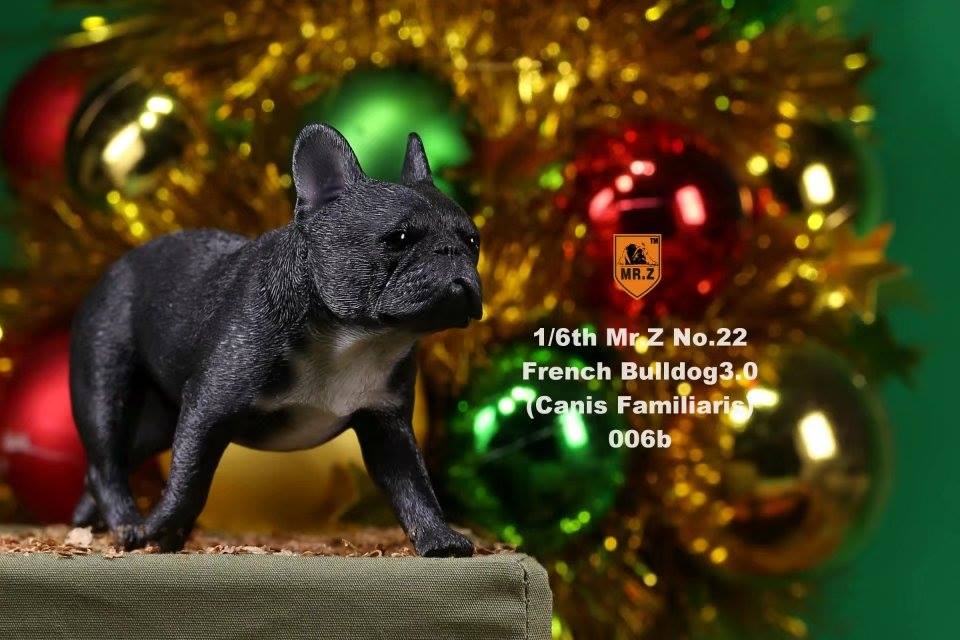 mrz-french bulldog11