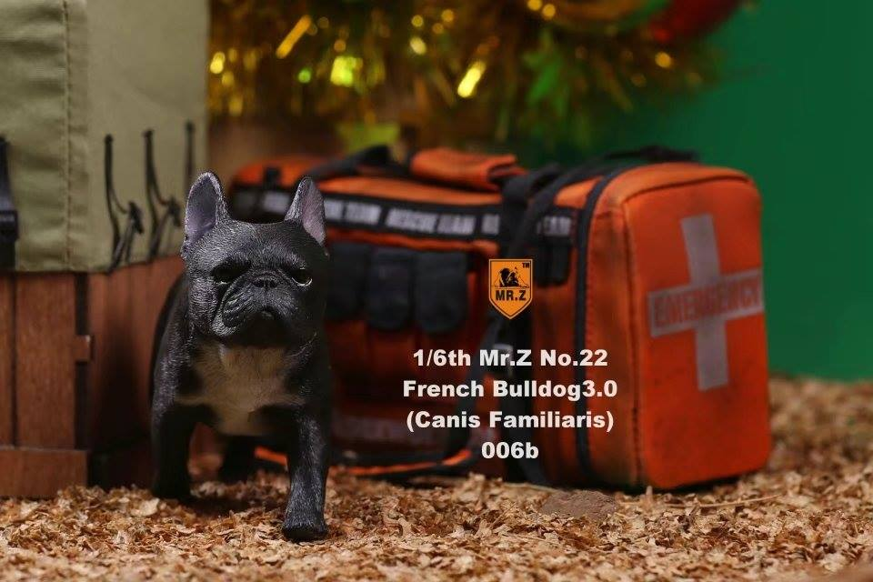 mrz-french bulldog12