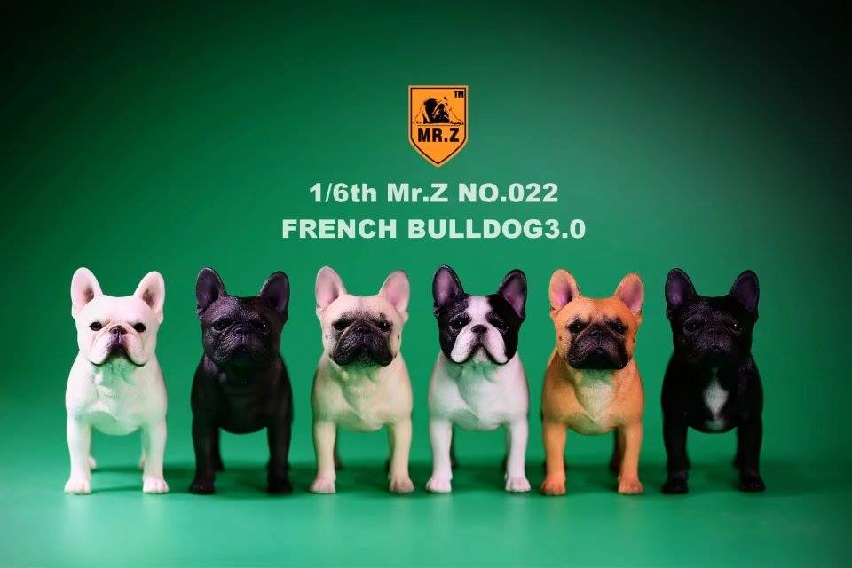 mrz-french bulldog13