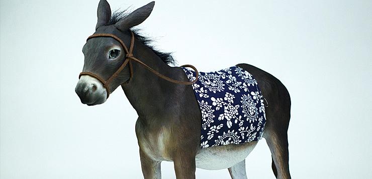 sg.donkey00