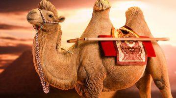jxk-camel00