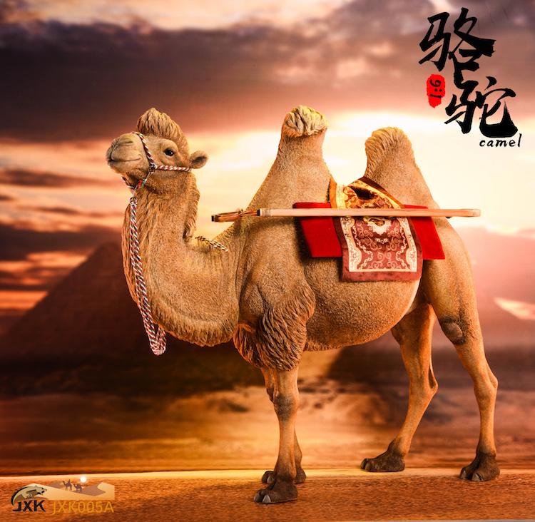 jxk-camel01