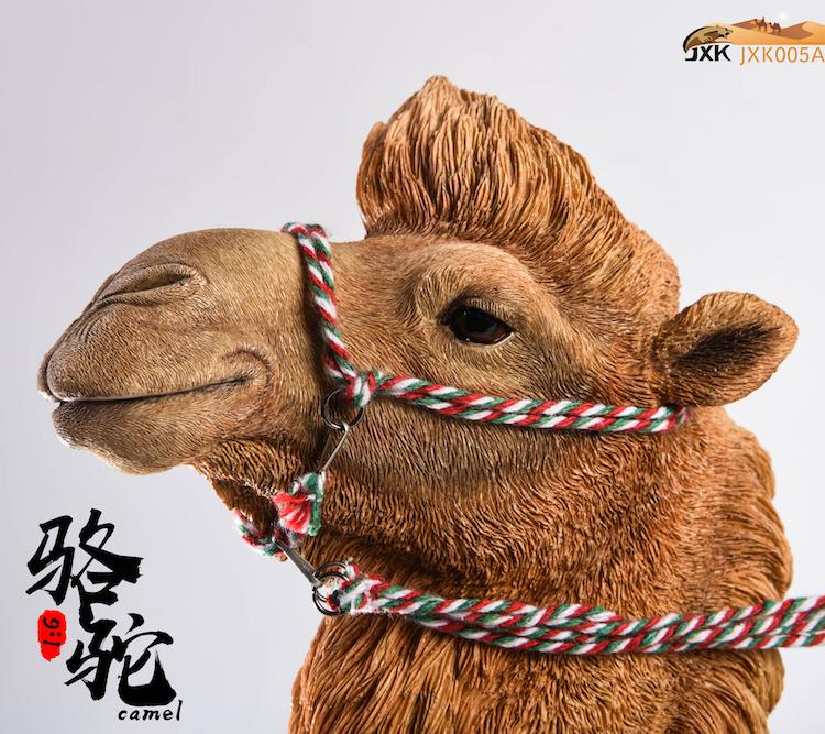 jxk-camel05