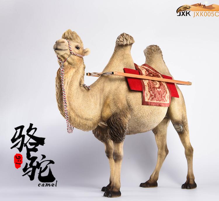 jxk-camel10