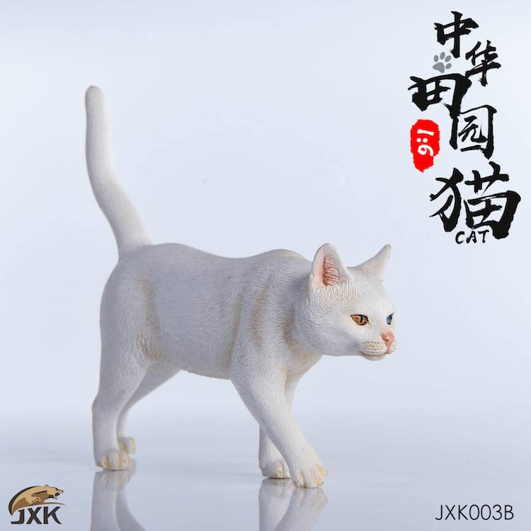 jxk-cats03
