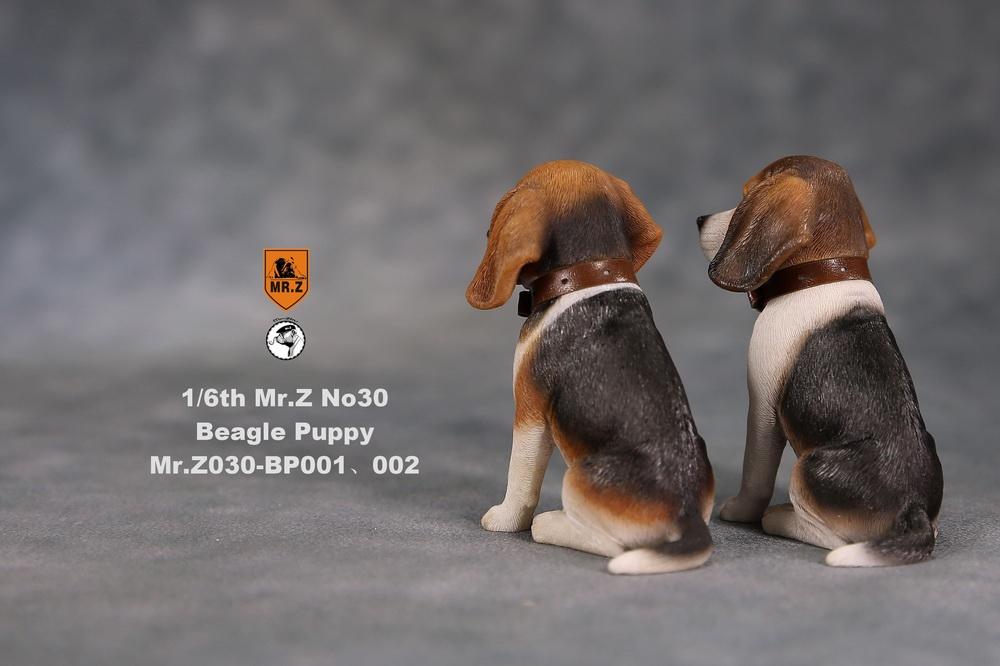 mrZ-dog30-02
