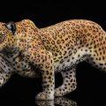 jxk-leopard00