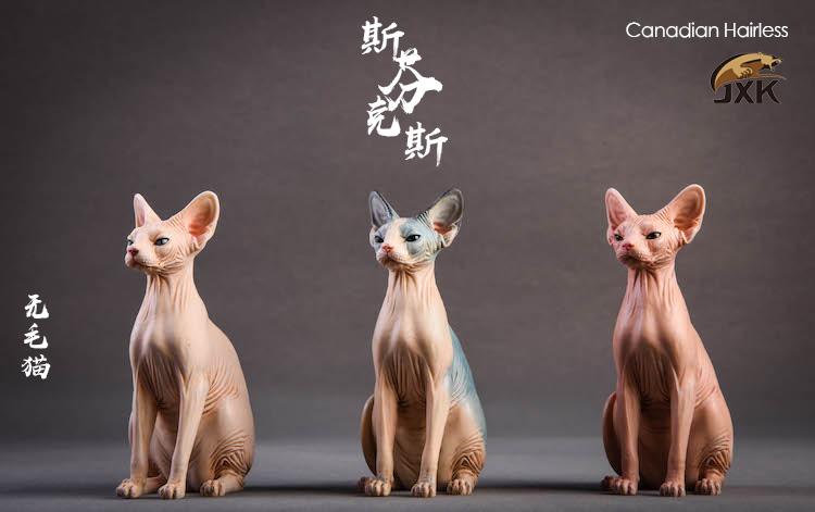 jxk-hairless cat01