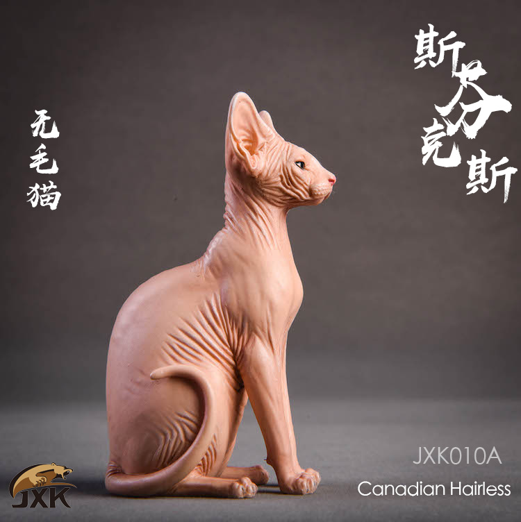 jxk-hairless cat02