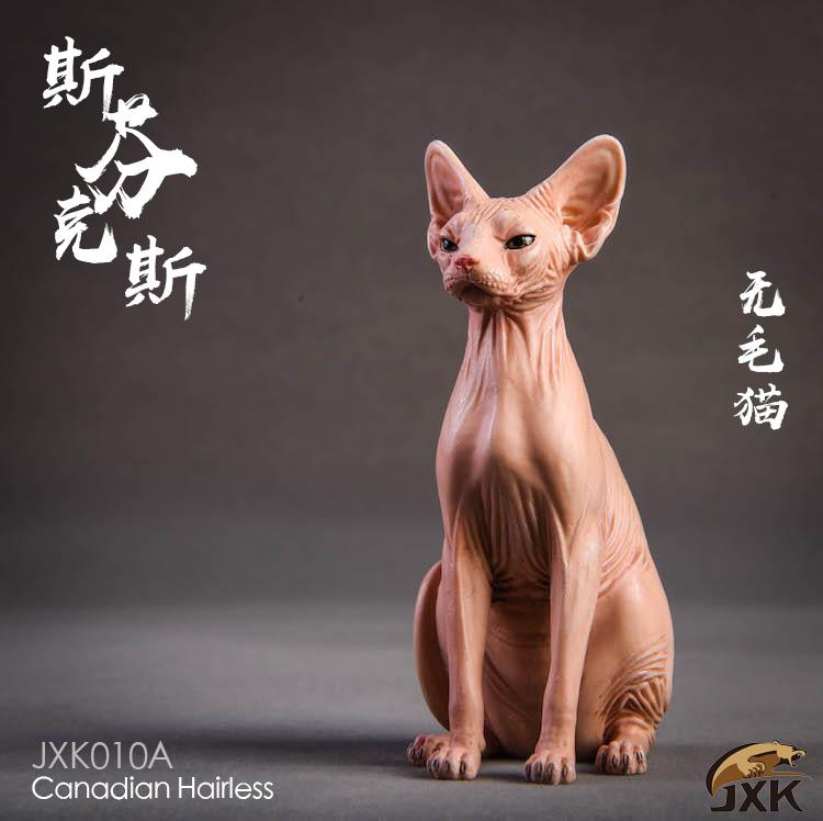 jxk-hairless cat03