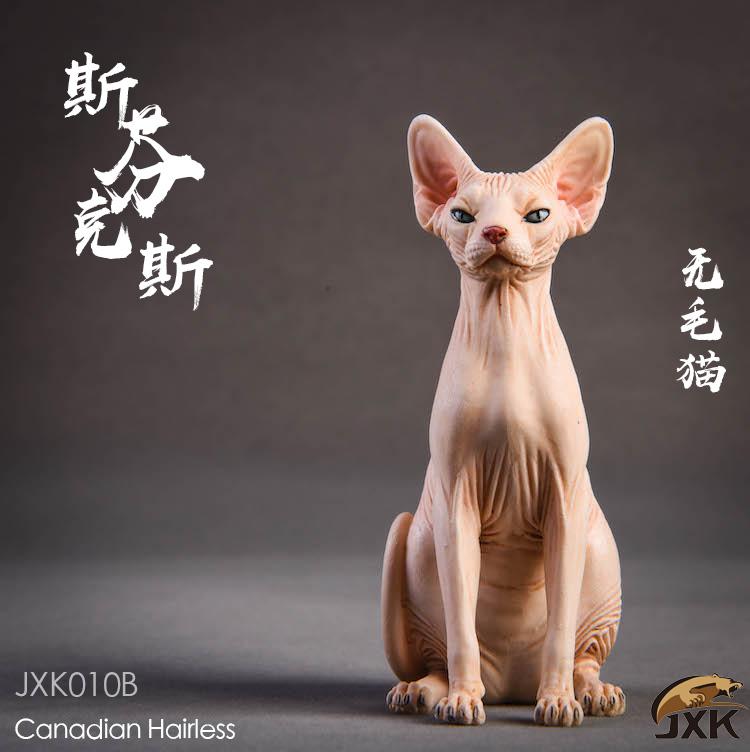 jxk-hairless cat05