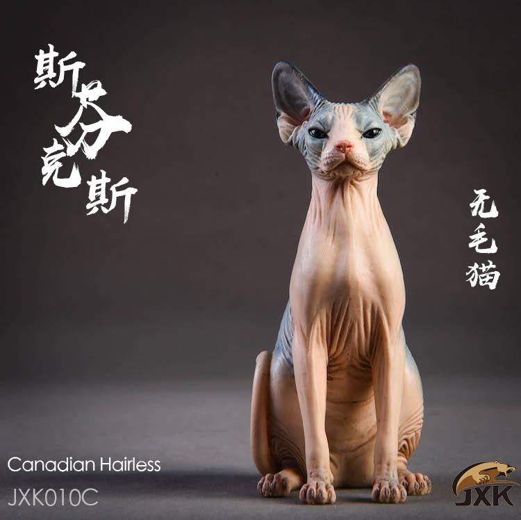 jxk-hairless cat06