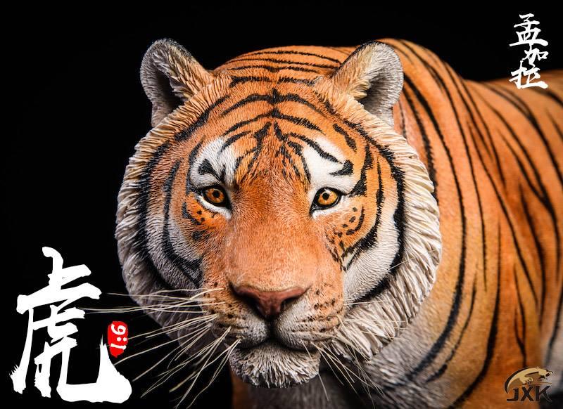 jxk-tiger03