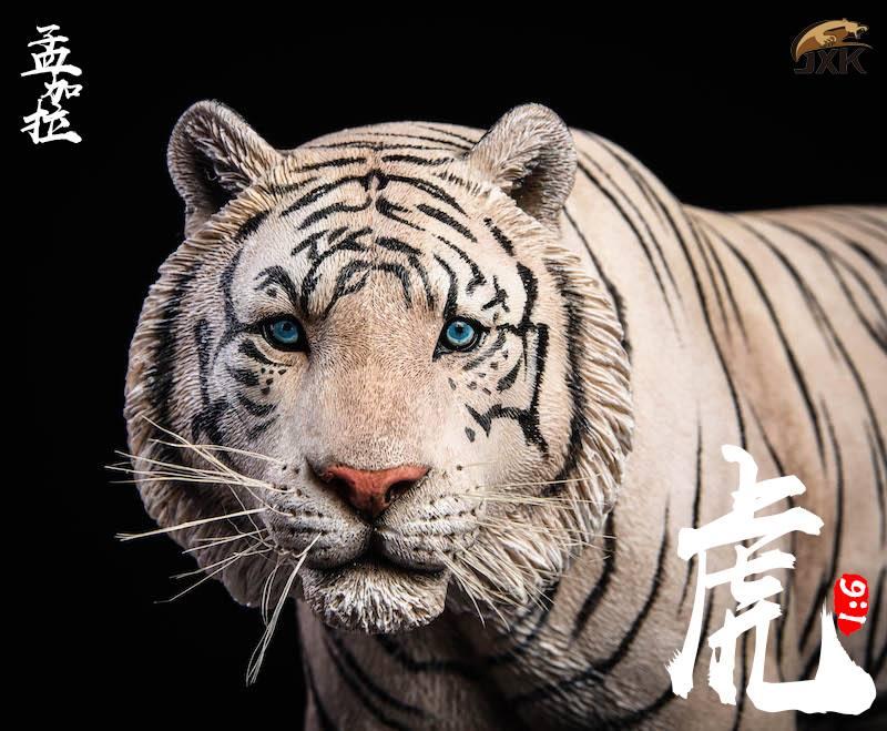 jxk-tiger07