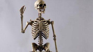 coo-skelett00