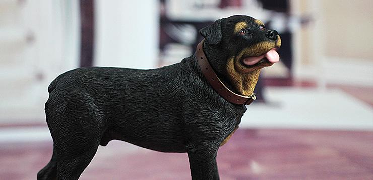 sgtdog11-00