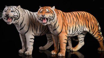 jxk-tiger00