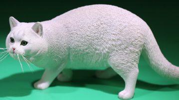 mrZ-cat-british00