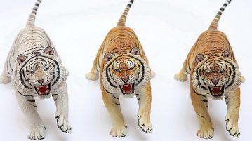 mrZ-tiger00