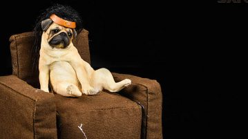 jxk-dog.armchair00
