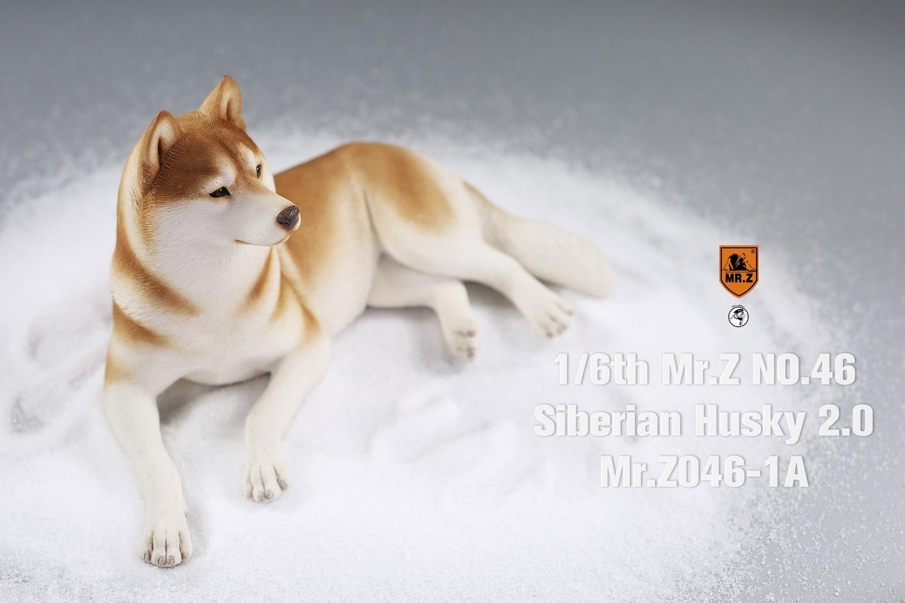 mrz-husky01
