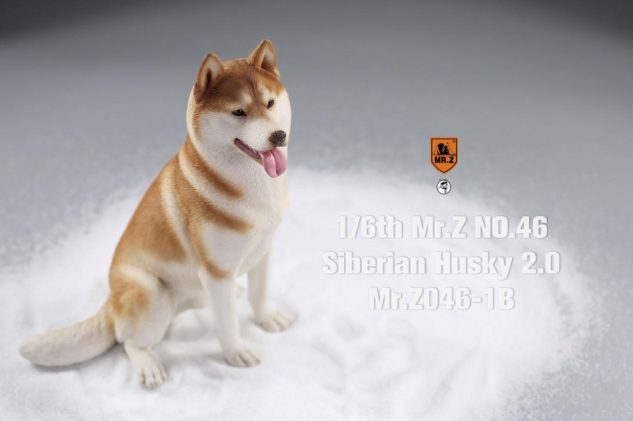 mrz-husky02