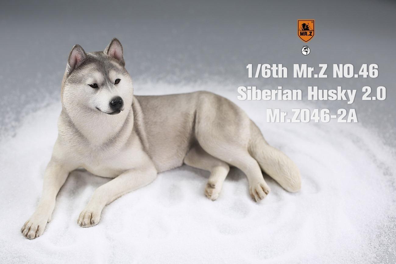 mrz-husky03