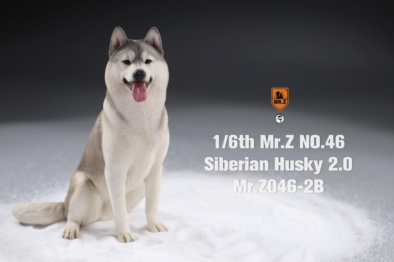 mrz-husky04